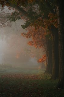 Herbstanfang von Jana Behr