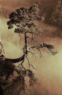 'Mystic tree' von Jana Behr
