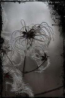 Pflanzenwelt  von artpic