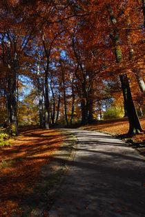 Durch den Herbst spazieren by hannes cmarits
