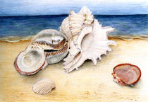 Stilleben mit Muscheln by Annette Kretzschmar