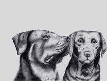 Rottweiler und Labrador von Sarina Pillusch