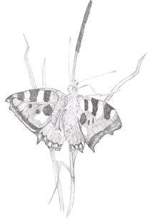 Schmetterling auf Grashalm von Heike Nedo