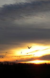 Sonnenaufgang auf Rügen mit Möwen von Heike Nedo