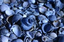 Muscheln in Blau  von Michaela Steininger