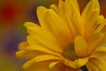 Movement in Yellow von Christine Amstutz