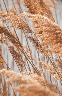 Die Gräser folgen dem Rhythmus des Windes von Christine Amstutz