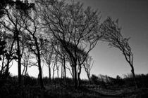 vom wind geformt II by daniela scharnowski
