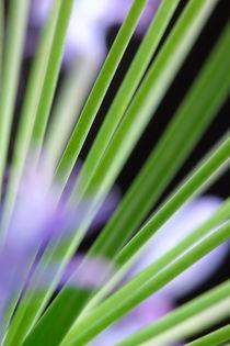 flower mikado by daniela scharnowski