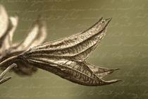 perfume cobra by daniela scharnowski