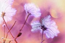 fluffy dream by daniela scharnowski