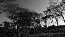 vom wind geformt I by daniela scharnowski