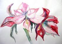 Amaryllisblüten von ernart