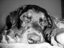 Hundeblick von photophilie
