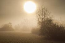 Nebelmorgen by augenblick