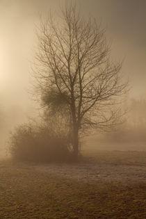 Baum im Nebel by augenblick