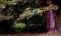 Waldidylle von anoreng