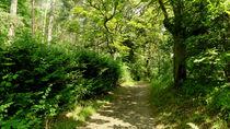 Waldweg von anoreng