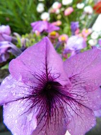 Blumen - Traum von tabeaskunstwelt