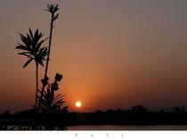 Sonne 1 von Bettina Helmert