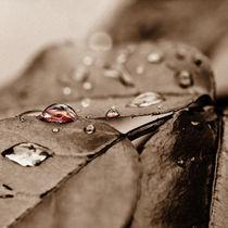 If a rose cries... by Mandy Tabatt