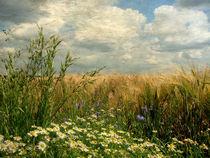 Gräser und Feldblumen (Vintage) by Mathias May