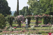 Renaissancegarten mit Rosen und Marmorskulptur by Victoria Garden