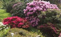 Rhododendrongarten by Victoria Garden