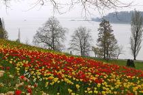 Tausend Rote Tausend Gelbe by Victoria Garden