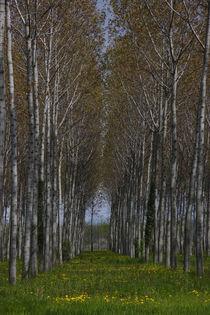 Zündholzbäume von Katharina Kascelan