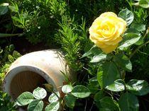 Rosenbeet by mjam
