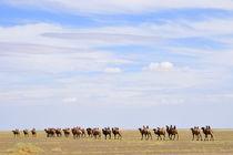 Kamel Karawane - Mongolei von Johann Loigge