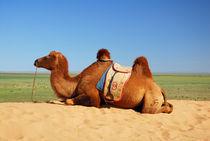 Kamel - Südgobi  von Johann Loigge