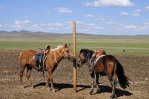 Pferde von Johann Loigge