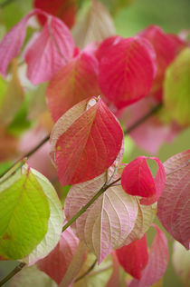 Colorful leafs von AD DESIGN Photo + PhotoArt