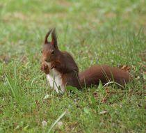 Eichhörnchen Pfötchen von kattobello