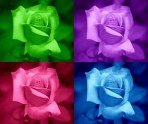 Rosen Collage by kattobello