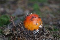 Pilzgeburt von kattobello