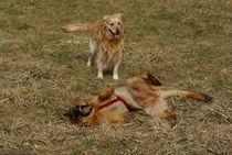 Happy Dogs von kattobello