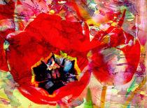 Tulpenart by Matthias Rehme