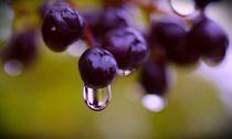 Regen im Herbst von inti