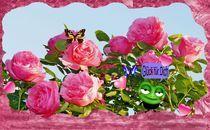 Titelbild  Rosenkalender by inti