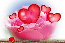 Herz-Rose von inti