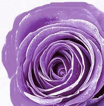 lila by inti