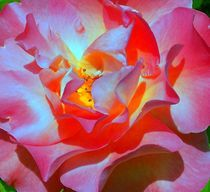 Heißer Sonnenschein und Rosenwirbel by inti