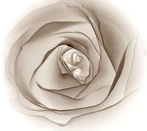 Sepia-Rose by inti
