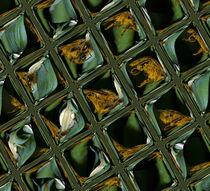 Kachelkrabbenspinne von Rainar Nitzsche