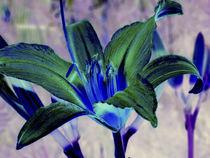 Blüte blaugrün von Rainar Nitzsche