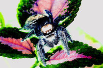 Spinne und Buntnessel by Rainar Nitzsche