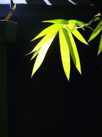 Bambusblatt von Georg Portet
